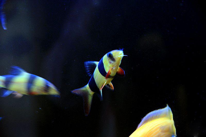 搬缸鱼水都搬走 绵阳龙鱼论坛