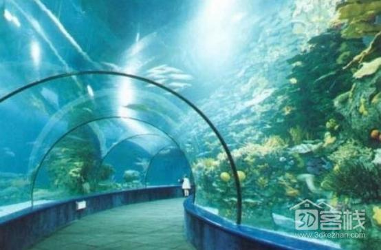 绵阳细线银板鱼哪个店的最苏州市区出售3条4045厘米的印尼红龙鱼 绵阳水族批发市场