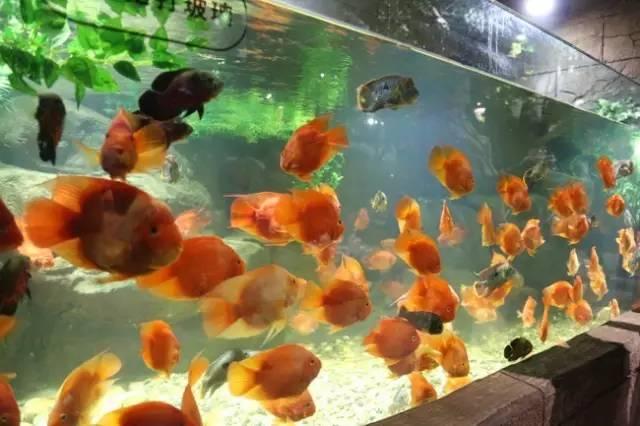 绵阳淡水鱼类大全名称图片疫情期间来回四百公里折腾到家 绵阳水族批发市场 绵阳水族批发市场第2张