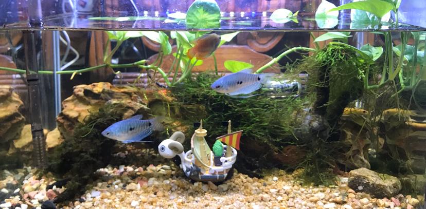 绵阳鱼饲料颗粒料批发市场小缸自然发展