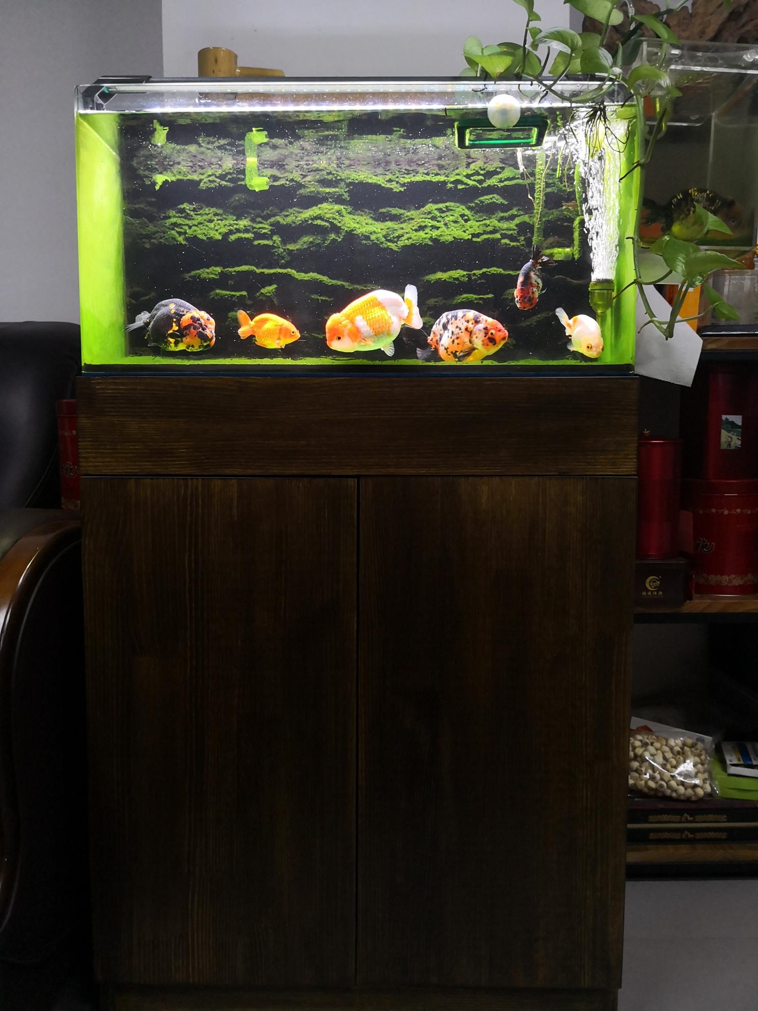 绵阳花鸟鱼虫图片喝茶看鱼有人说这是爱好