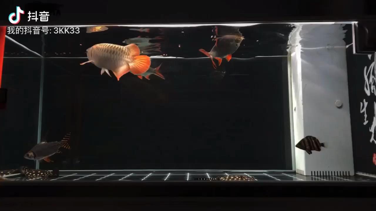 鱼的记忆不止7秒