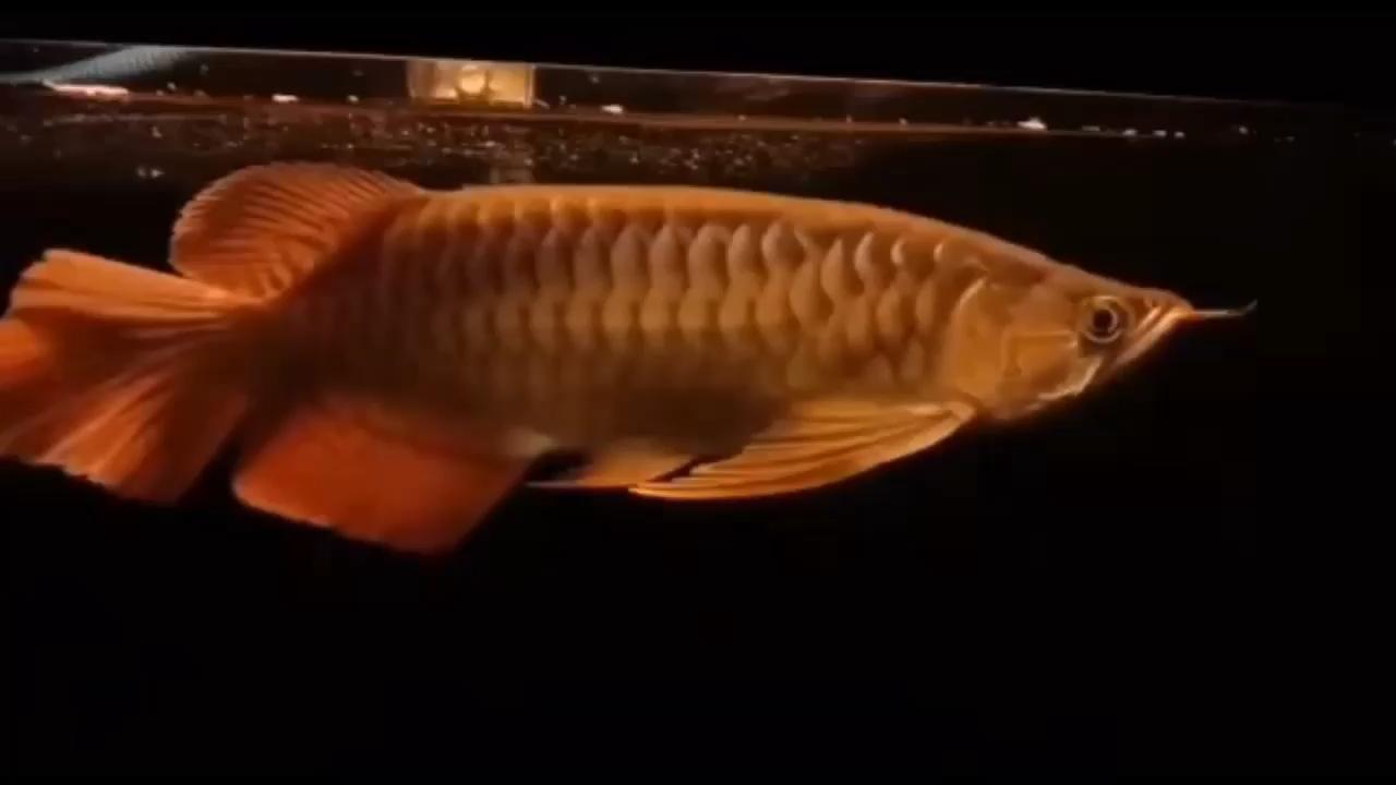 这鱼的潜力到哪里去
