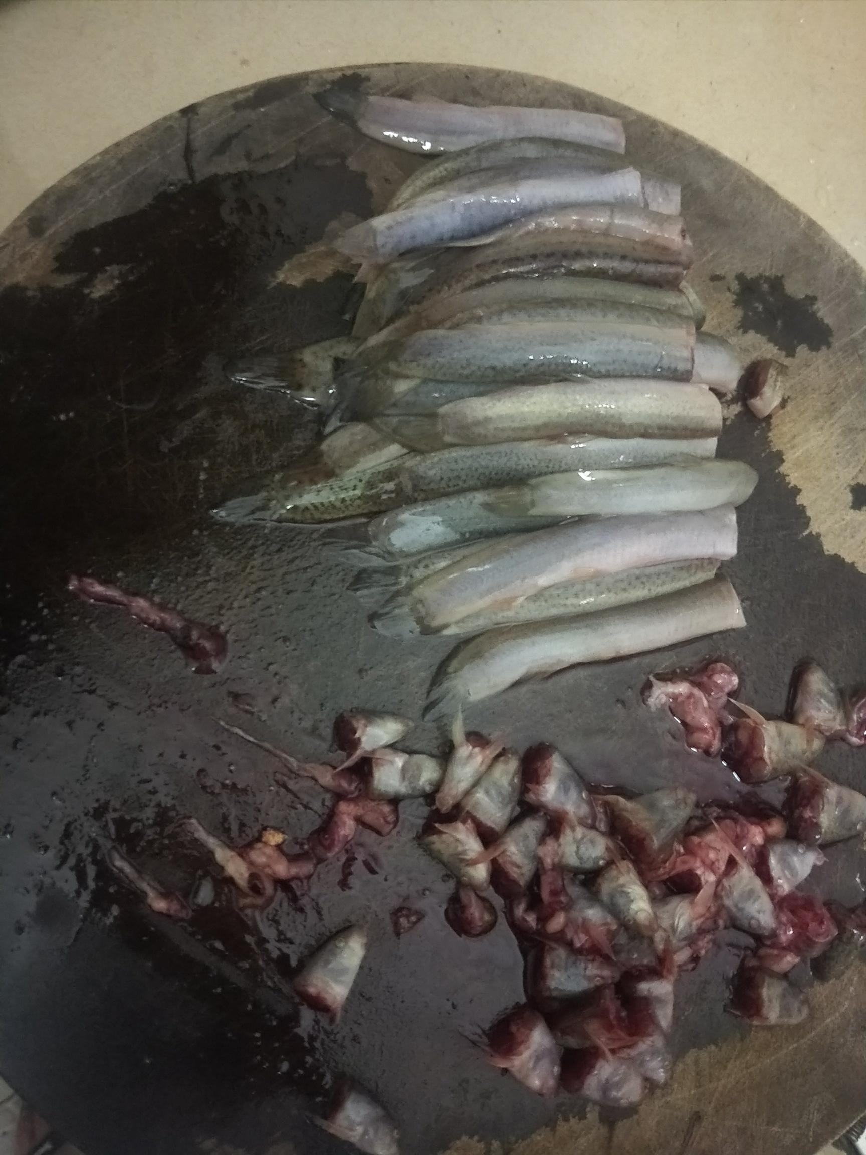 泥鳅处理方法 绵阳水族批发市场 绵阳水族批发市场第6张