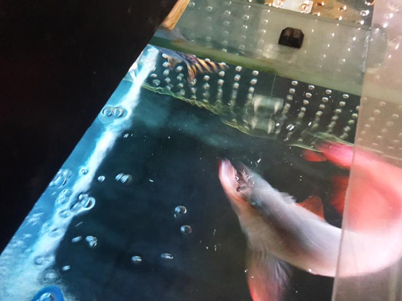 我与爱鱼的美好时光之拉老婆进坑 绵阳水族批发市场 绵阳水族批发市场第5张