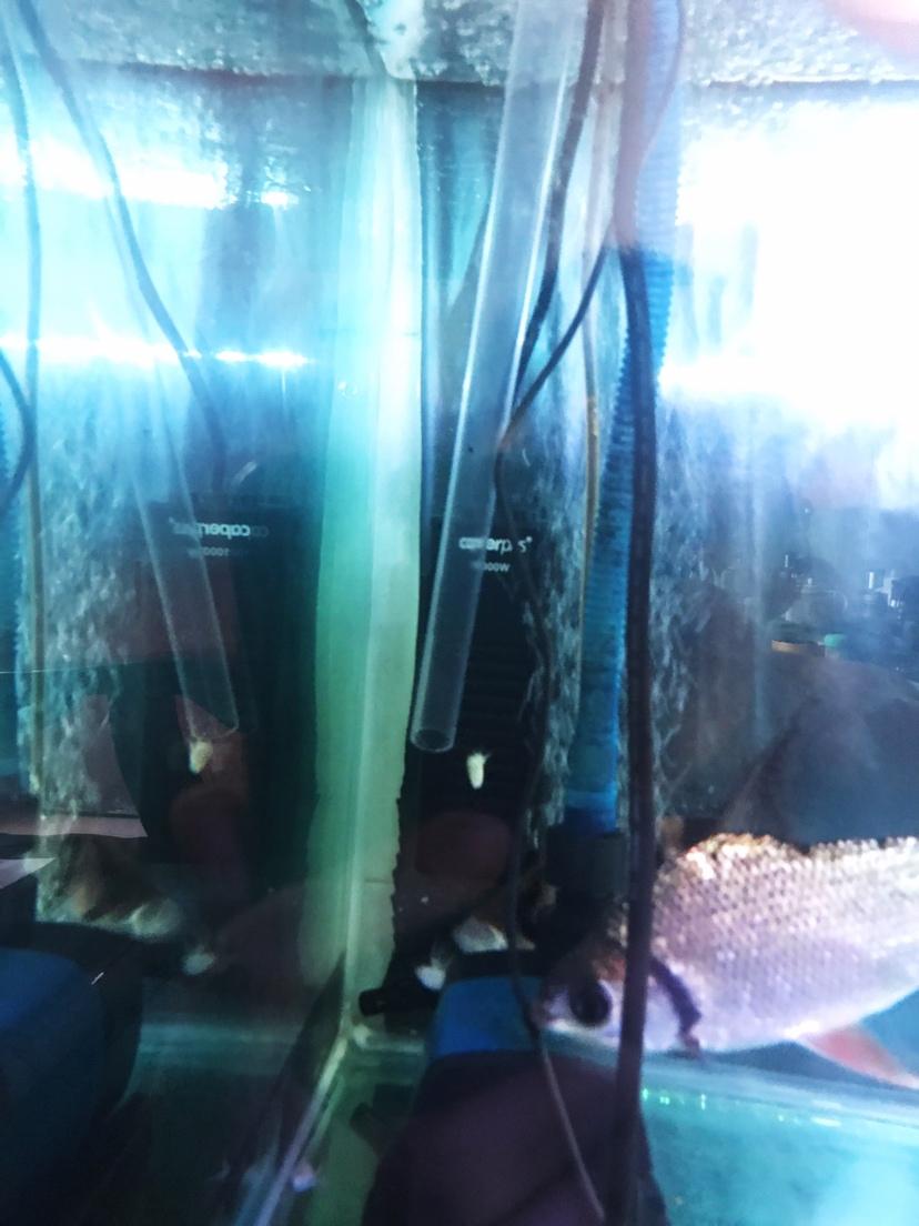 我与爱鱼的美好时光之拉老婆进坑 绵阳水族批发市场 绵阳水族批发市场第9张