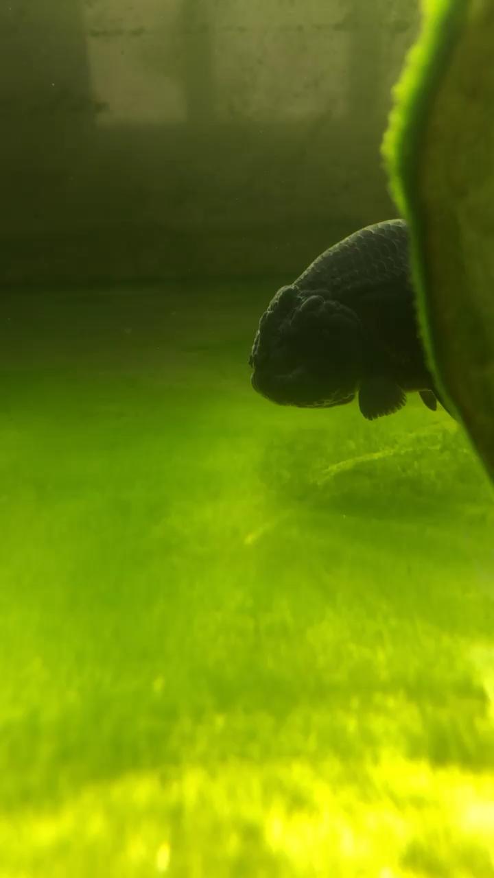 绿藻破坏者