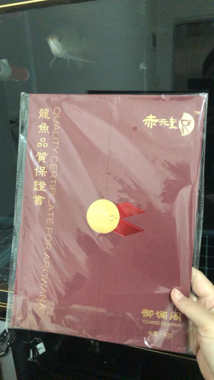 有点小兴奋 绵阳龙鱼论坛 绵阳水族批发市场第1张