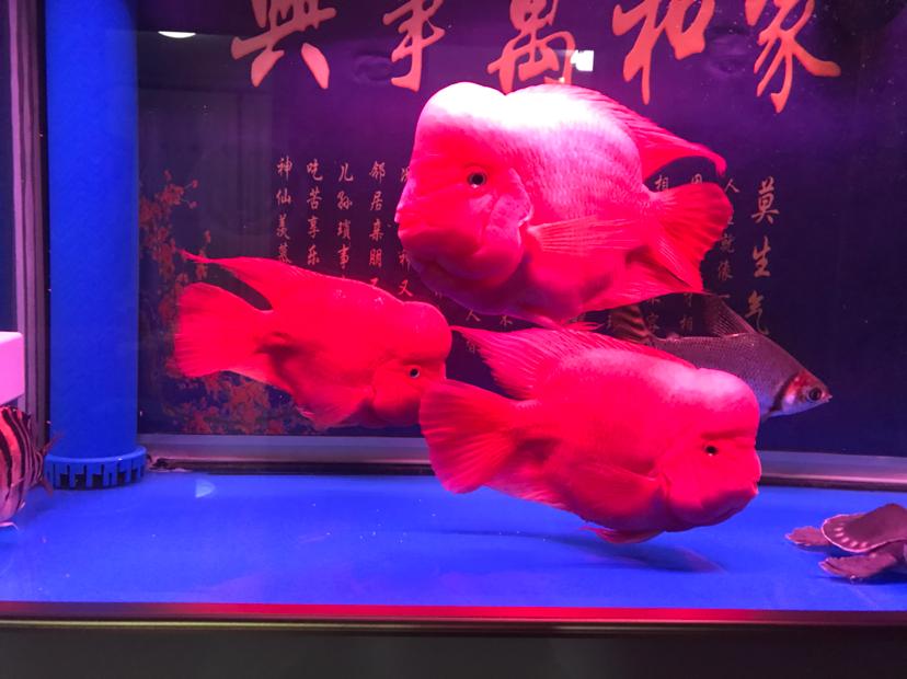 绵阳宠物交易网养成定时换水的好习惯 绵阳龙鱼论坛 绵阳水族批发市场第1张