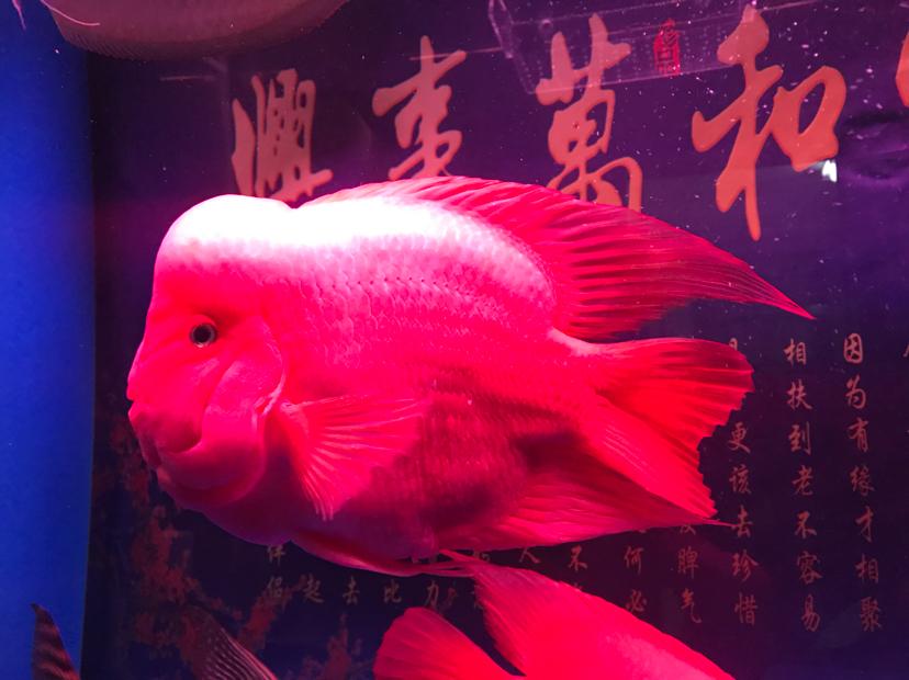 绵阳宠物交易网养成定时换水的好习惯 绵阳龙鱼论坛 绵阳水族批发市场第2张