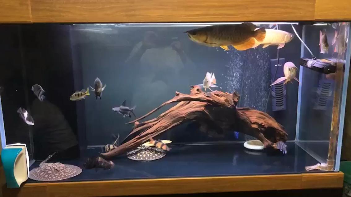 歡樂養魚第16棒